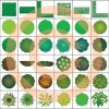 фотография Artisans Gardens Landscape Design Symbols in Plan View color